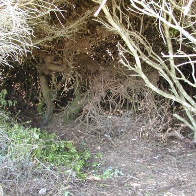 More Creepy Bushes